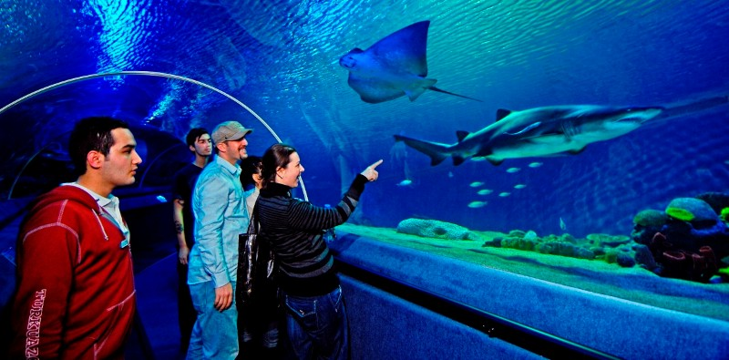 Istanbul Aquarium Tour, Istanbul Aquarium