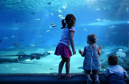 Istanbul Aquarium Tour Istanbul Aquarium